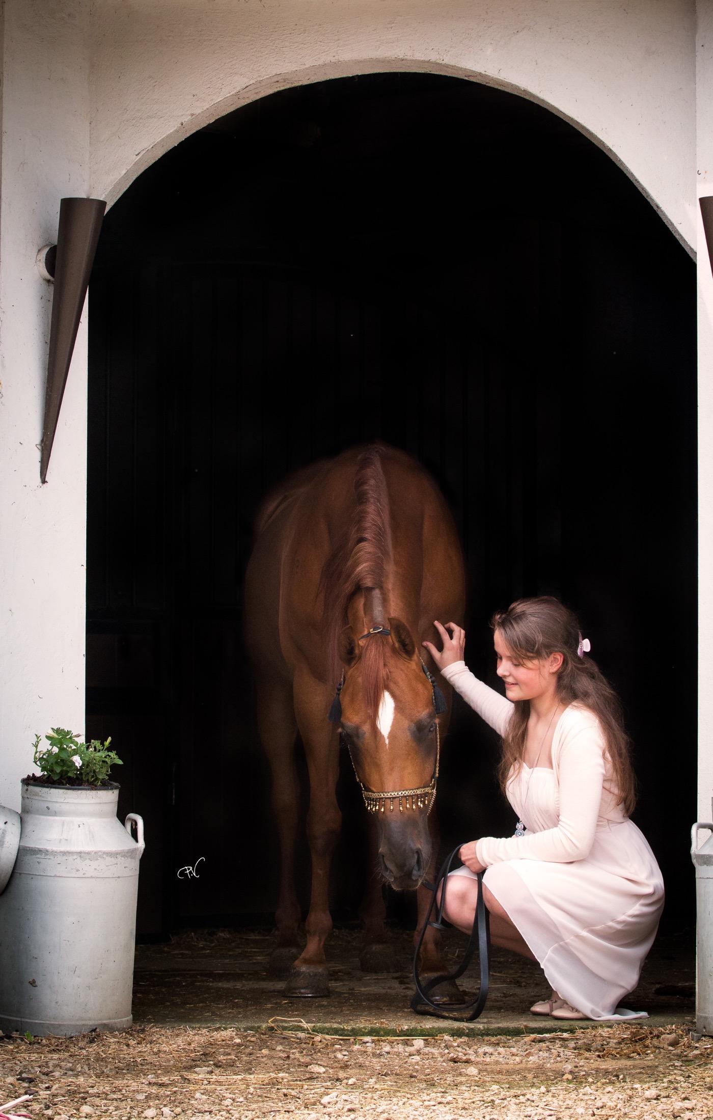 VDB_ARABIANS_HORSES06
